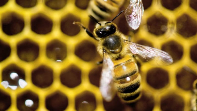 Charlottetown architects get busy educating public on bees