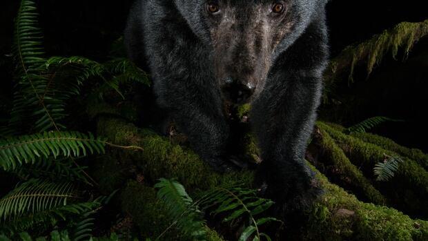 B.C. wildlife photographer wins 2 prestigious international awards | CBC News