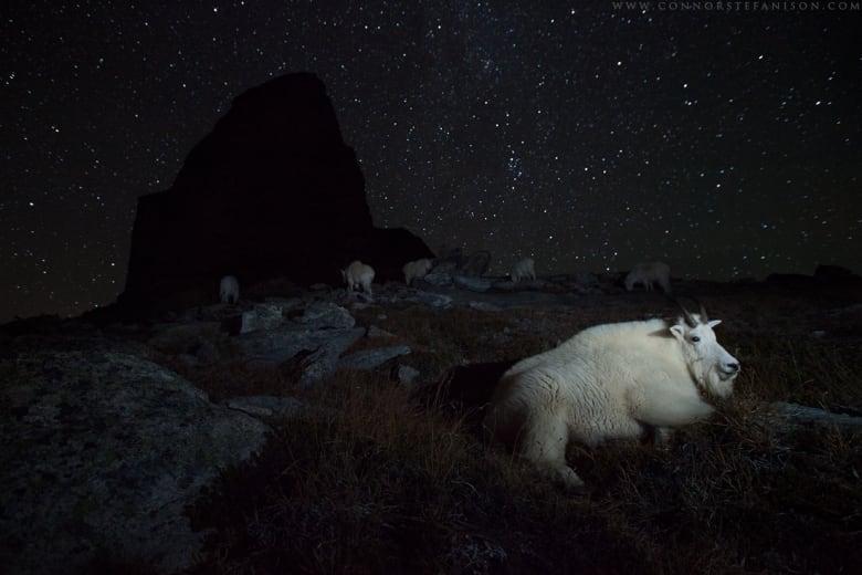 Burnaby's Connor Stefanison wins 2 international wildlife photography awards