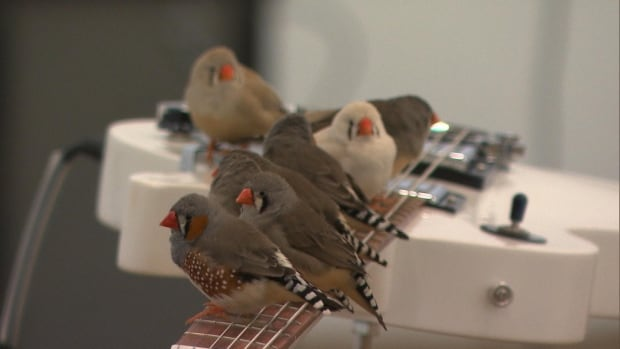 finches guitar mmfa