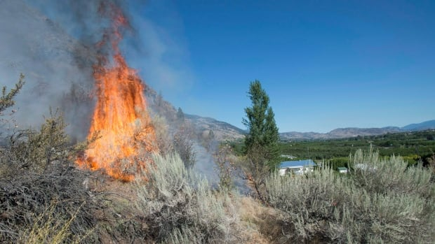 Flame leaps from a wildfire on a mountainside near Oliver, B.C., in August 2015. Alain Bourque, a top climate change scientist, says warmer summers could mean more forest fires in Canada.