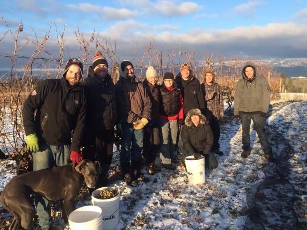 Ice wine pickers