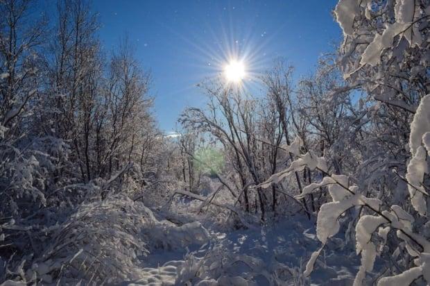 Snowy scene in Goose Bay