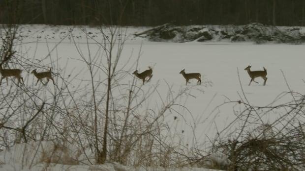 si-deer-dancing
