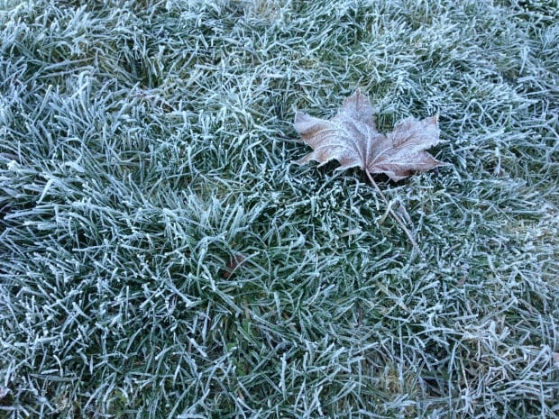 weather-frost covers lawn