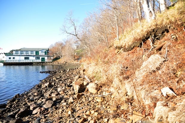 Living shoreline Halifax