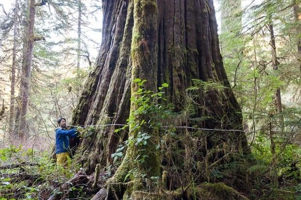 Logging Jobs North Vancouver Island