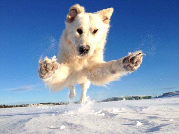 Hank the dog in winter