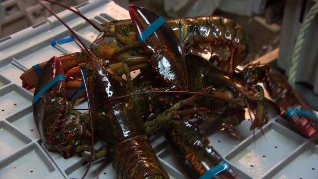 As demand for Nova Scotia lobster continues to grow and prices remain strong, the provincial government is hoping programs focused on quality can maximize industry potential.