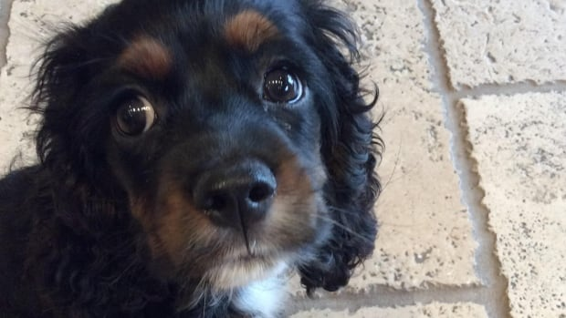 Mila, a five-month old cocker spaniel, died in June after being attacked by a pitbull in Yaletown, and now her owner is suing the City of Vancouver, and the couple that owns the pitbill.