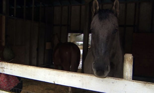 SALI Farm horses