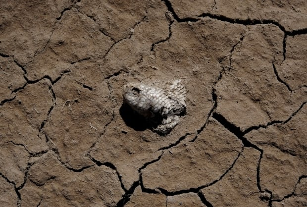 CLIMATECHANGE-SUMMIT/BOLIVIA-LAKE
