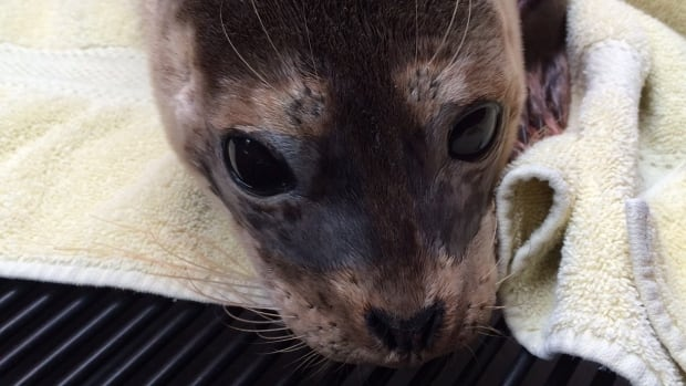 CBC news canada british-columbia topic tag b c  wildlife