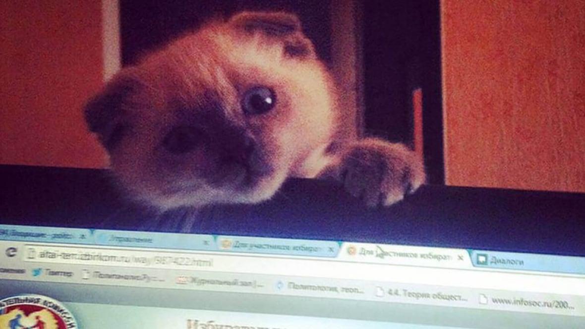 Risultati immagini per barsik the cat