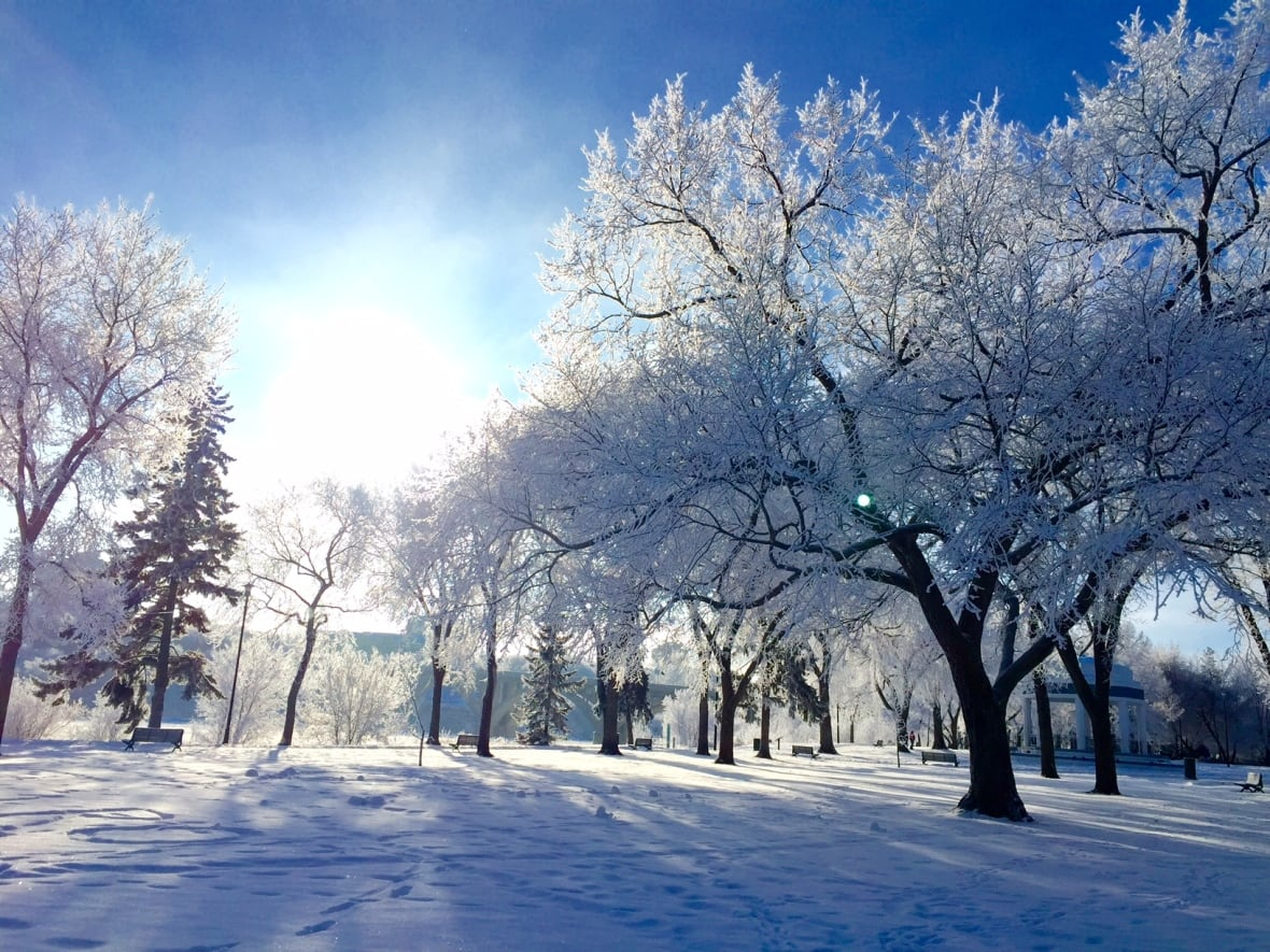 Image result for hoarfrost