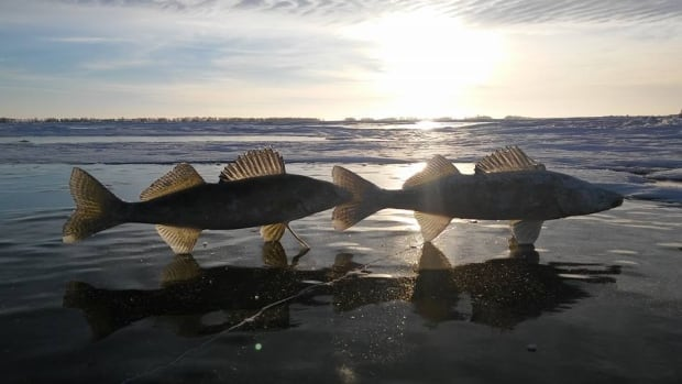 Manitoba ice fishing gets off to hot start after warm for Ice fishing near me