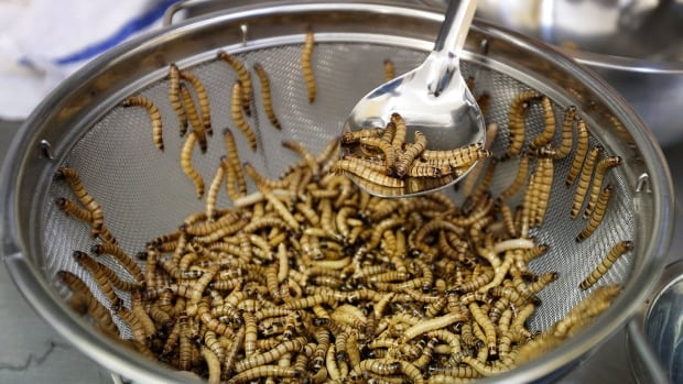 "Meal worms are sorted before being cooked Wednesday, Feb. 18, 2015, in San Francisco. A growing number of ""entopreneurs"" are trying to persuade consumers that insects are the next super food, a nutritious, low-cost, environmentally friendly source of protein that can help feed a hungry world. But they face a tough job convincing Westerners that crickets, meal worms and caterpillars can be tasty treats."