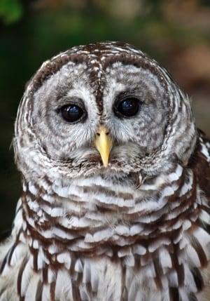 Owl vs Owl
