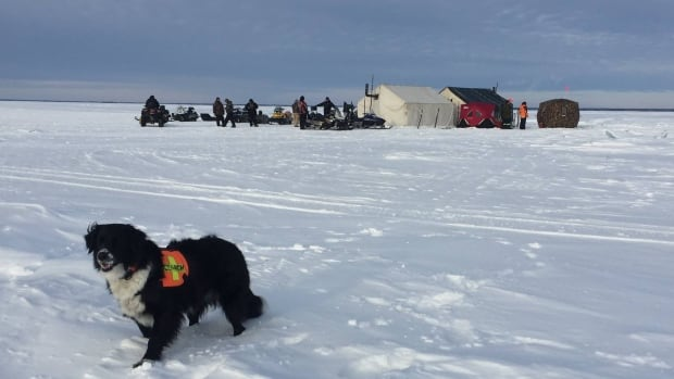 The Canadian Search and Disaster Dogs Association went to Lac La Ronge, Sask. to help search for a missing man.