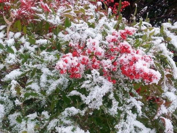 pitt meadows snow
