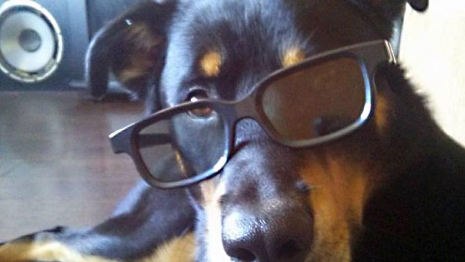 Dog owner Lucas MacNeil defends Rottweiler-cross after