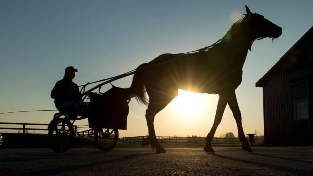 A horse trains at Classy Lanes Stables in Puslinch, Ontario. A fire in one of the facility's barn late Monday night claimed the lives of 43 horses.  A tribute to the horses takes place at Woodbine Racetrack tonight.
