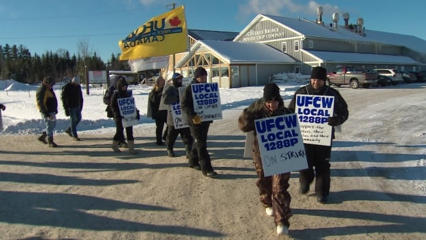 Unionized workers at Covered Bridge Potato Chips near Hartland walked off the job on Tuesday.
