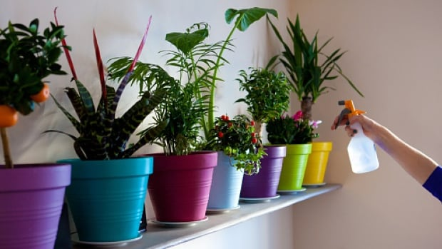 Master gardener Brian Minter says indoor plants can give a person a sense of well-being, and purify the air in one's home.