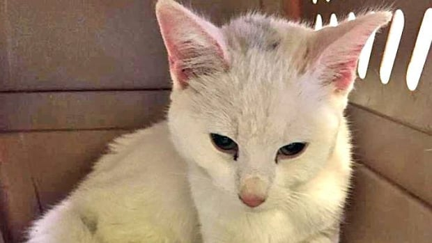 A rescued kitten named Snow will find a home with one the men who rescued her.