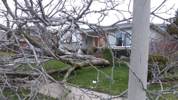 Powerful winds downed this tree of Perran Drive in Mississauga. Nasty weather conditions are expected to taper Sunday night.
