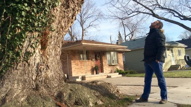 City forester Paul Giroux marvels at the size of one of the oldest trees in Windsor.