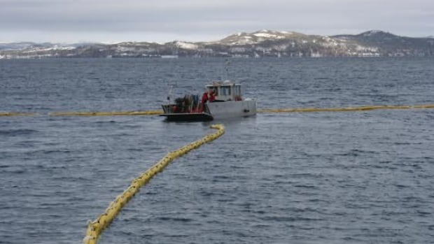 It's estimated that 10 barrels of oil escaped into the bay before the leak was discovered.