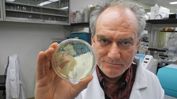 Martin Kalmokoff, a food safety scientist with Agriculture and Agri-Food Canada, said a team of researchers is trying to track why certain types of e coli flourish in some cattle.