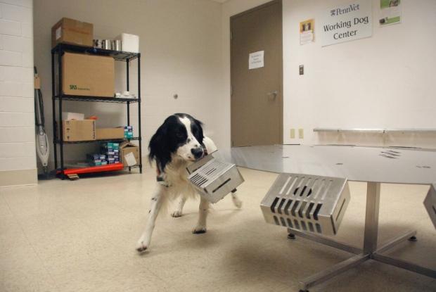 CAncer Dog wheel