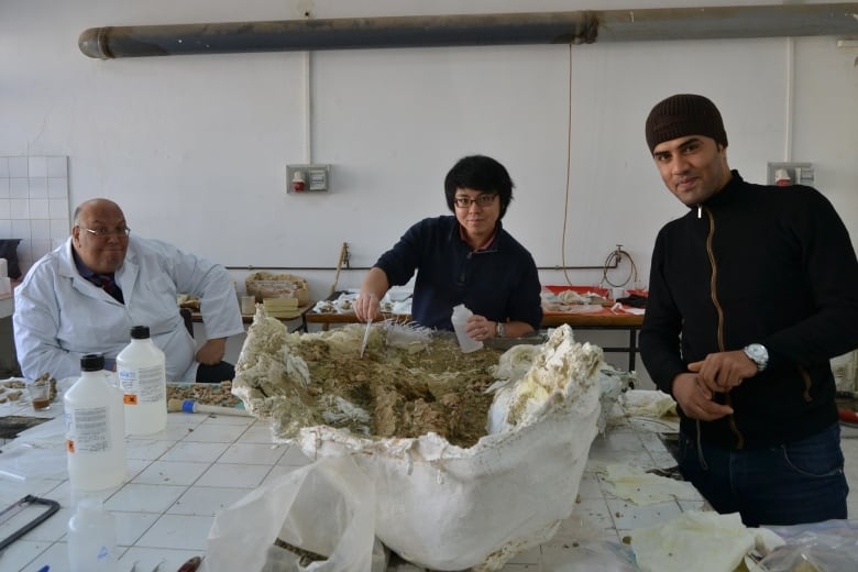 Ancient saltwater crocodile may have been largest that ever lived
