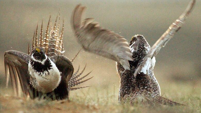 New smartphone app helps you identify Alberta's wildlife | CBC News