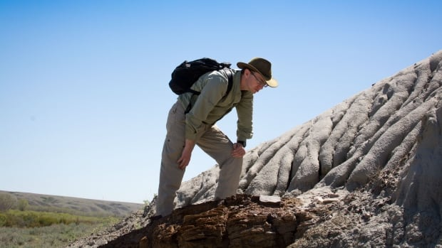 Scott Persons examines the Tyrannosaur tracks found at Glenrock, Wyoming.