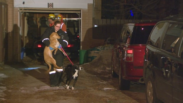 Two dogs seized by Animal Services in Toronto after police conducted a drug raid at a home in Etobicoke on Sunday.