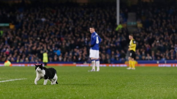 In an FA Cup soccer match on Jan. 9, 2016, a cat interrupted the Everton and Dagenham & Redbridge football clubs around the 85th minute of play. Everton went on to win 2-0.