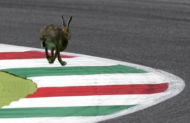 Rabbit runs the Italian Grand Prix