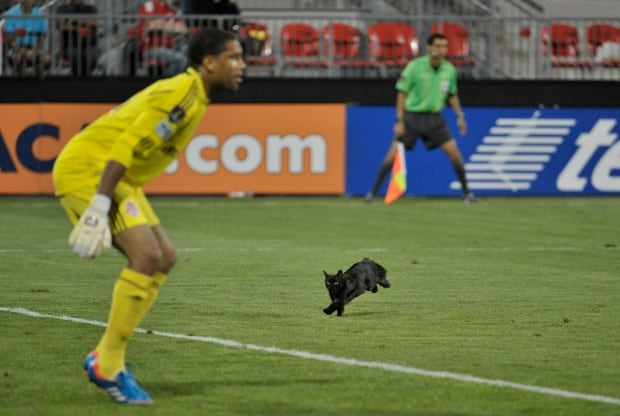 Black cat runs onto the pitch