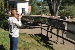 Amanda Melin Zebra Calgary Zoo