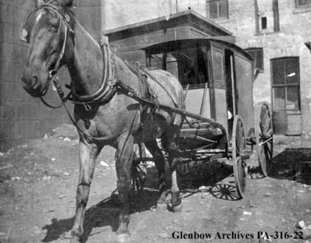 Calgary milk delivery, c. 1905