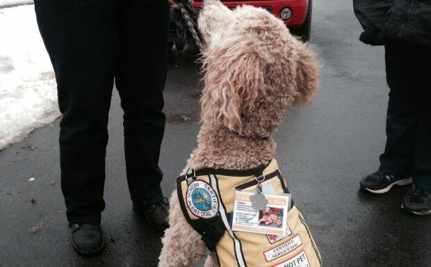 Rescue dog, eye contact