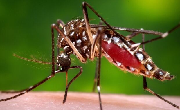 Zika Mosquito 5 Things
