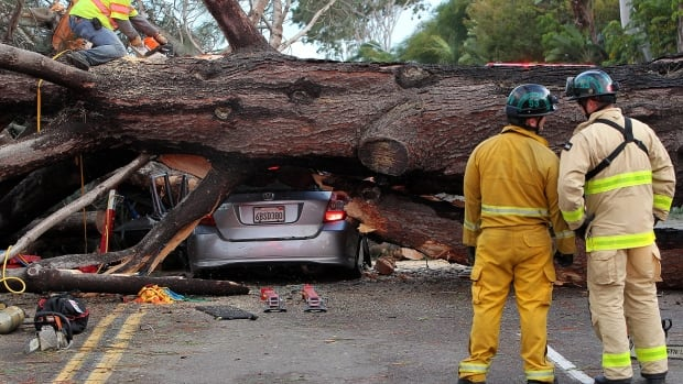 Firefighters on Sunday work to remove a large tree that fell across multiple lanes of traffic, killing a motorist, in Pacific Beach, Calif.