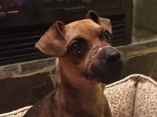 Michael Hill, the man accused of binding a dog's snout, neck and legs with electrical tape (seen here) and leaving it behind a shopping centre, pleaded guilty to an animal-cruelty charge and was sentenced to two years in jail.