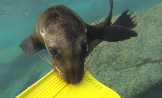Sea Lion Brian Keating