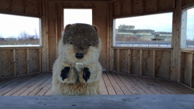 Manitoba Merv didn't see his shadow this Groundhog Day, meaning an early spring is on the way.