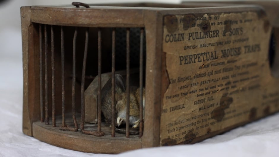 A mousetrap manufactured in 1861 claimed it's latest victim in 2016.